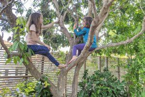 שירה ונעמה מטפסות על העץ. מקצב של חופש